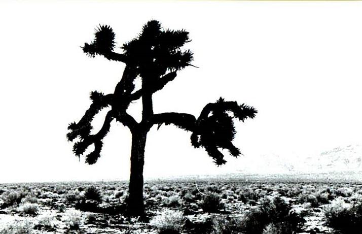 u2_-_the_joshua_tree_f